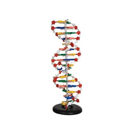 Modelo Dupla Hélice em DNA
