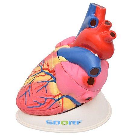 Modelo Anatômico Ampliado do Coração - 3 partes