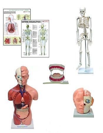 Kit de Anatomia 1