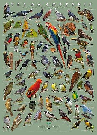 Pôster Aves da Amazônia