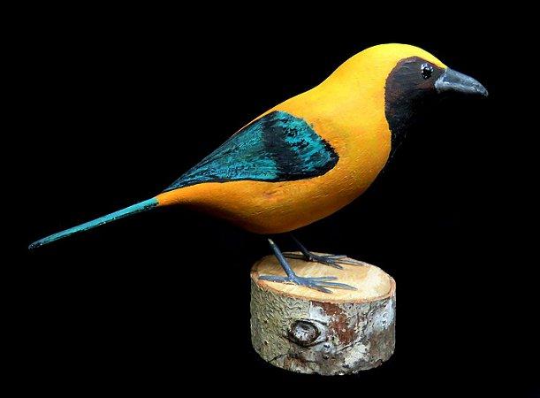 Miniatura madeira Saíra-Amarela