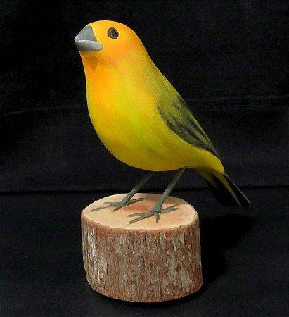 Miniatura madeira Canário-da-Terra