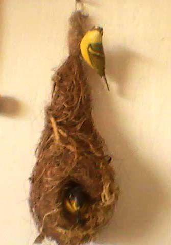 Miniatura madeira casal de Ferreirinho no ninho