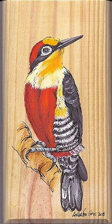 Arte em Madeira - Benedito-de-testa-amarela