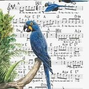 Reprodução Fine Art - Arara-azul