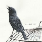 Imã pequeno - Pássaro-preto