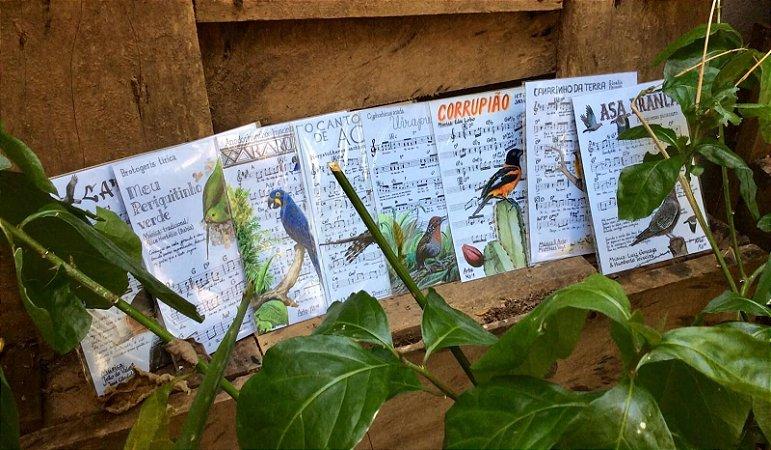Coleção com 8 ímãs grandes (Arara-azul, Asa-branca, Canário-da-terra, Periquito-verde, Acauã, Corrupião, Uirapuru, Caracará)