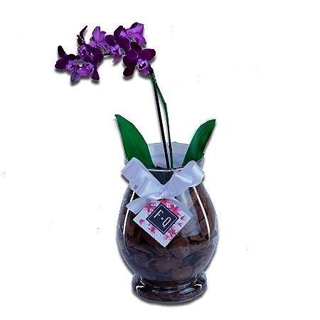 Mini Vaso Orquídea Phalaenopsis