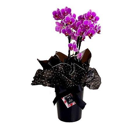 Mini Orquídea com Cachepot Preto