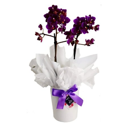 Mini Orquídea com Cachepot Branco