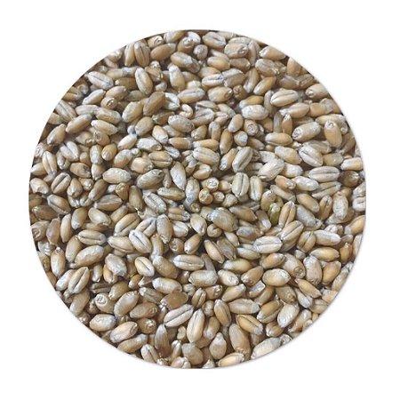 Trigo em Grãos ( R$0,80/100g )