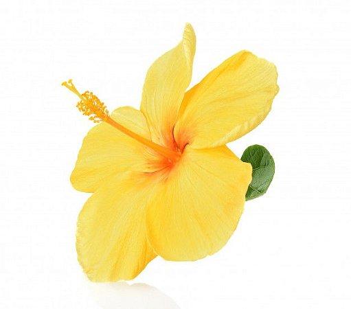 Hibisco Amarelo Escuro - Muda com 45cm