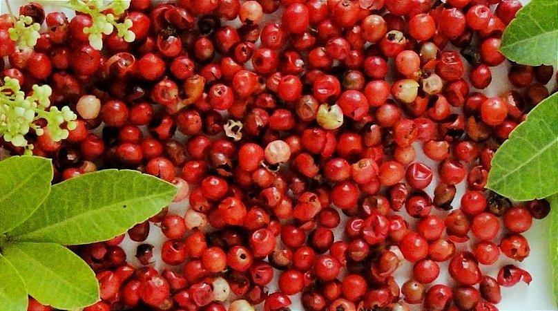 Aroeira Pimenta Rosa - 1 muda 70cm- Cultivo Livre de Agrotóxicos