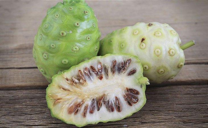 Noni - Vaso Com 1 Muda - Cultivo Sem Agrotóxicos