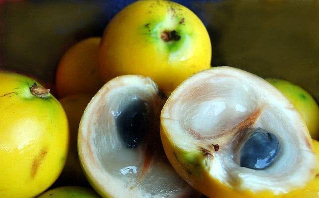 Abiu Amarelo - 1 Muda De 1m - Cultivo Livre De Agrotóxicos