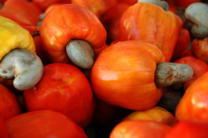 Caju Vermelho  - 1 Muda  - Sem Agrotóxico