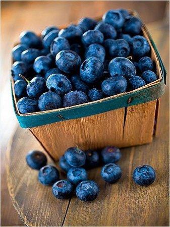 Mirtilo Blueberry - 1 Muda - Próxima De Produzir