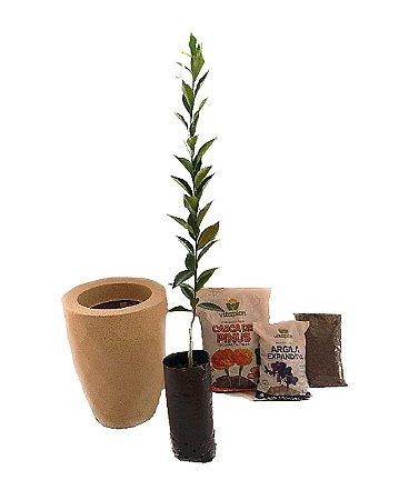 Kit Mãos na terra -  Vaso Safira + Muda de Limão - Pronto para plantar