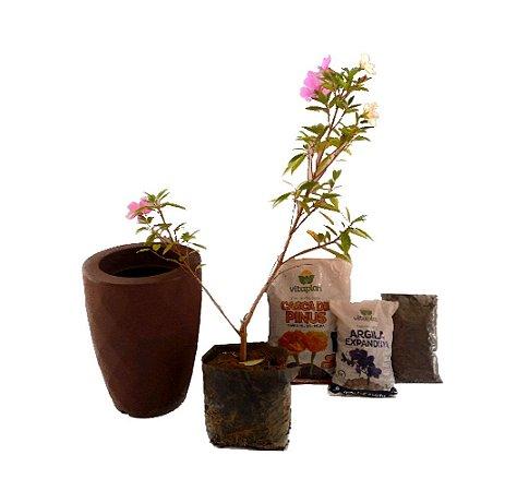 Kit Mãos na terra -  Vaso Safira + Manacá Anã - Pronto para plantar