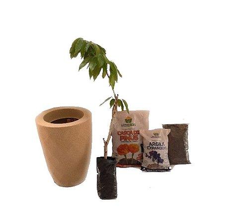 Kit Mãos na terra -  Vaso Safira + Muda de Lichia - Pronto para plantar