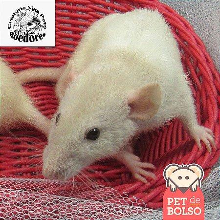 Ratas Dumbo - Nina Pets