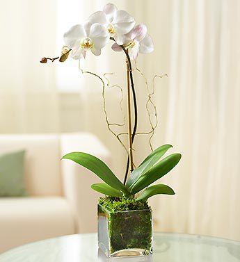 Orquídea com base de vidro transparente