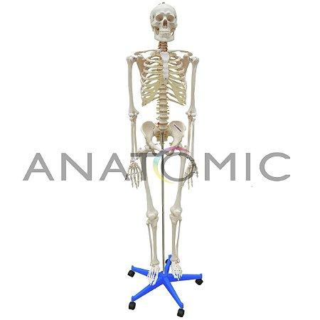 Esqueleto 170 cm, Padrão, com Suporte e Base com Rodas - TGD-0101