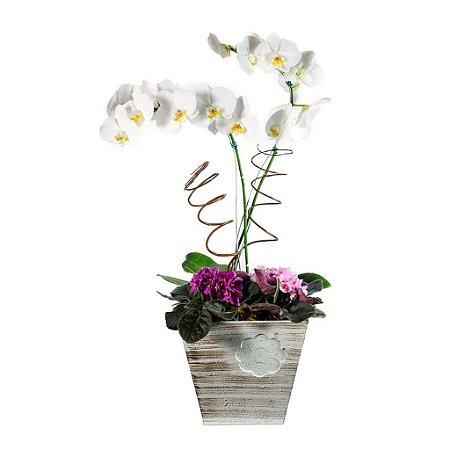 Phalaenopsis Branca com duas Violetas