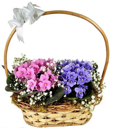 Cestinha Jardineira de Violetas