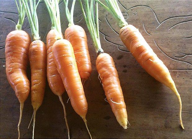 Cenoura (maço)