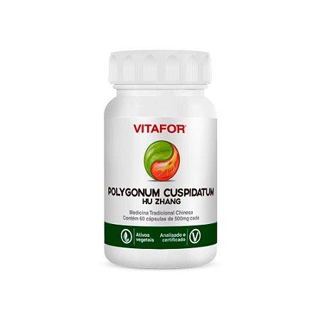 Polygonum Cuspidatum - Hu Zhang - Vitafor