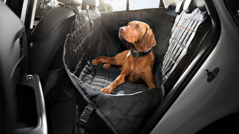 Audi Dog Seat Protection