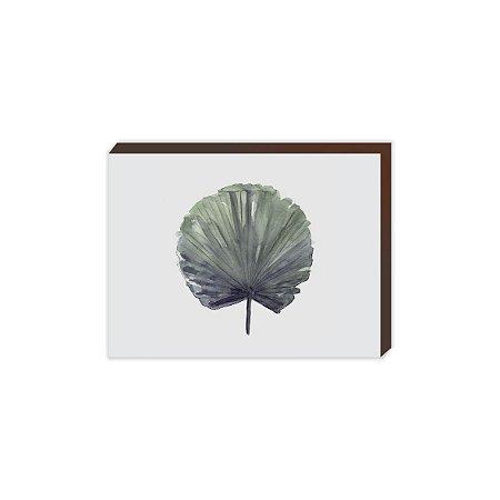Palmeira Leque - ZOOM [BoxMadeira]