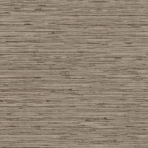 Papel de parede Choice premier (Liso) - Cód. CP 9072
