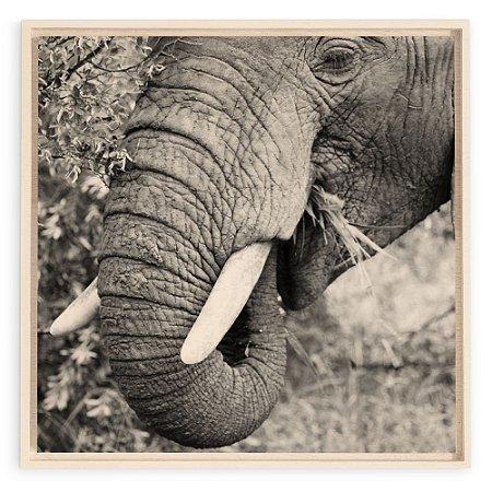 Collection - Kruger Elephant