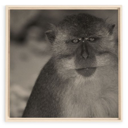 Collection - Krabi Monkey PB
