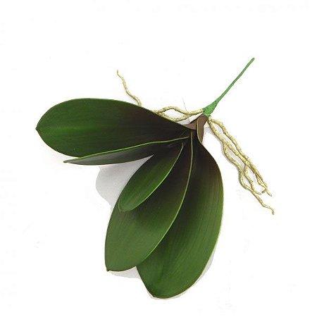 Folha de Orquidea Phalaenopsis 12x35cm