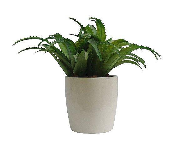 Arranjo Suculenta Aloe Mini Cachepot Cerâmica Branco 25x25cm