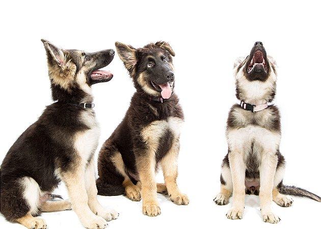 Quadro Decorativo Poster Três Cachorros