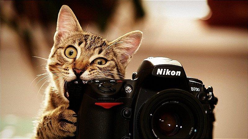 Quadro Decorativo Poster Gato Câmera