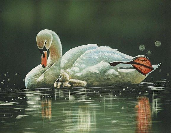Quadro Decorativo Poster Pato