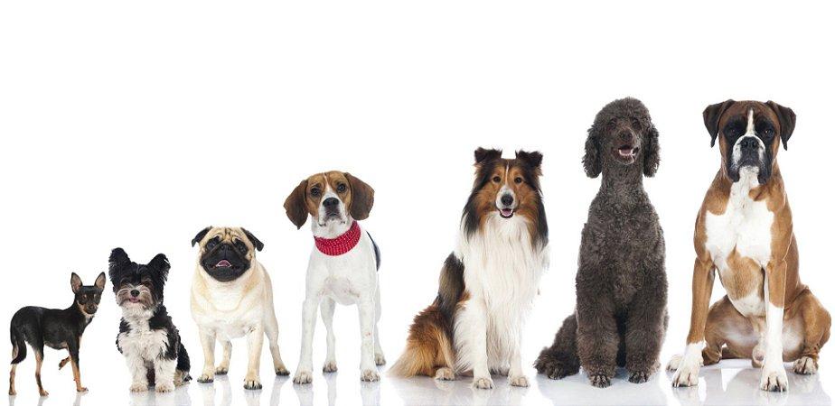 Quadro Decorativo Poster Cães em Fileira
