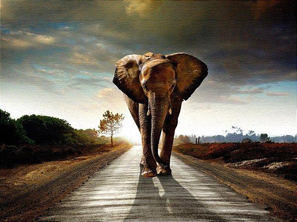Quadro Decorativo Poster Elefante