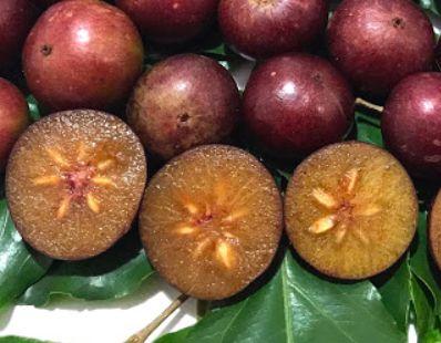 AMEIXA da ÍNDIA ( Flacourtia jangomas )