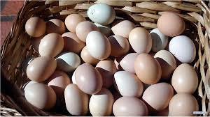 Ovos Coloniais - Dúzia