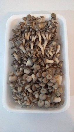 Cogumelo Shimeji Branco - 200 gr