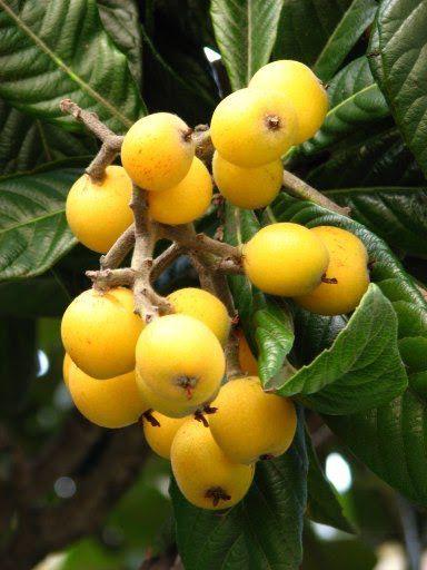 Ameixa Amarela Orgânica - 200 gr
