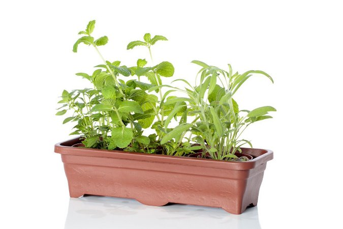 Jardineira 45 cm