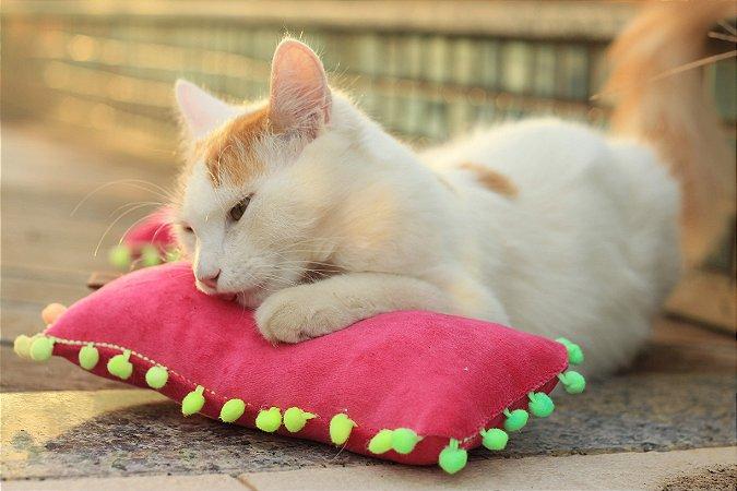 Almofadinha com Catnip - Coleção Pompom
