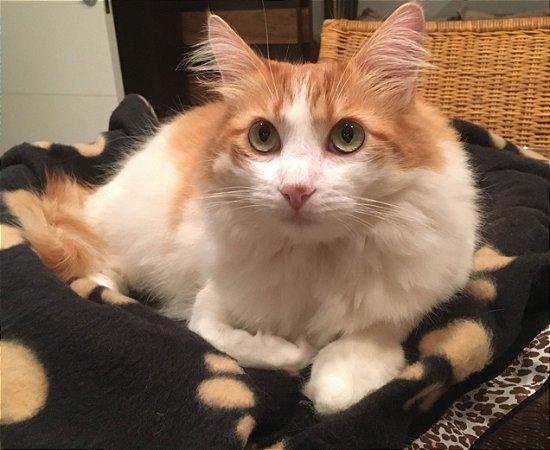 Manta Pet Fleece Boho
